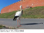 Купить «Белый аист», эксклюзивное фото № 11153944, снято 21 августа 2015 г. (c) Александр Тарасенков / Фотобанк Лори
