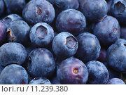 Купить «Blueberries», фото № 11239380, снято 16 июня 2019 г. (c) PantherMedia / Фотобанк Лори