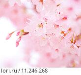Купить «Sakura», фото № 11246268, снято 15 сентября 2019 г. (c) PantherMedia / Фотобанк Лори