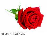 Купить «Rose Flower», фото № 11257280, снято 16 июня 2019 г. (c) PantherMedia / Фотобанк Лори