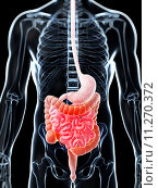 Купить «3d rendered illustration of a painful bowel», фото № 11270372, снято 24 мая 2018 г. (c) PantherMedia / Фотобанк Лори