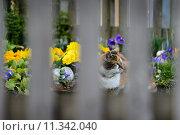 Купить «green yellow plant sitting flower», фото № 11342040, снято 23 марта 2019 г. (c) PantherMedia / Фотобанк Лори