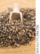 Seeds of a milk thistle (Silybum marianum, Scotch Thistle, Marian thistle ) Стоковое фото, фотограф j sierpniowka / PantherMedia / Фотобанк Лори
