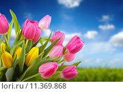 Купить «bouquet of colorful tulips against blue sky», фото № 11369868, снято 15 ноября 2018 г. (c) PantherMedia / Фотобанк Лори