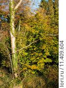 Купить «Осенний лес», фото № 11409604, снято 5 ноября 2012 г. (c) Татьяна Кахилл / Фотобанк Лори