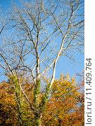 Купить «Осенний сезон», фото № 11409764, снято 5 ноября 2012 г. (c) Татьяна Кахилл / Фотобанк Лори