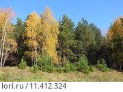 Купить «Опушка осеннего леса», эксклюзивное фото № 11412324, снято 27 сентября 2014 г. (c) Анатолий Матвейчук / Фотобанк Лори