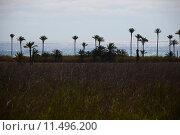 Купить «oasis,desert,palms,mirage,», фото № 11496200, снято 17 октября 2018 г. (c) PantherMedia / Фотобанк Лори