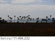 Купить «oasis,desert,palms,mirage,», фото № 11496232, снято 17 октября 2018 г. (c) PantherMedia / Фотобанк Лори