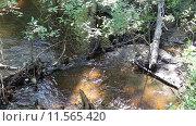 Купить «Чистая холодная вода лесного ручья», видеоролик № 11565420, снято 8 августа 2015 г. (c) Евгений Ткачёв / Фотобанк Лори