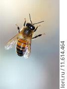 Купить «a honey bee on the glass», фото № 11614464, снято 21 сентября 2018 г. (c) PantherMedia / Фотобанк Лори