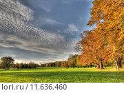 Купить «sky tree autumn gorgeous leaves», фото № 11636460, снято 22 марта 2019 г. (c) PantherMedia / Фотобанк Лори