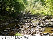 Купить «river in the forest with bridge», фото № 11657968, снято 15 ноября 2018 г. (c) PantherMedia / Фотобанк Лори