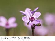 Купить «Wild flowers», фото № 11660936, снято 22 октября 2019 г. (c) PantherMedia / Фотобанк Лори