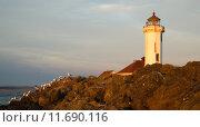 Купить «Seagulls Rest Shorebirds Rock Barrier Point Wilson Lighthouse», фото № 11690116, снято 27 марта 2019 г. (c) PantherMedia / Фотобанк Лори