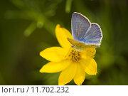 Купить «nature summer plant flower summerly», фото № 11702232, снято 14 ноября 2018 г. (c) PantherMedia / Фотобанк Лори