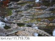 Купить «water animal reptile alligator wild», фото № 11719736, снято 22 октября 2019 г. (c) PantherMedia / Фотобанк Лори
