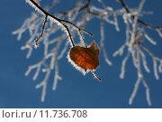 Купить «leaf autumn fall ice frost», фото № 11736708, снято 27 марта 2019 г. (c) PantherMedia / Фотобанк Лори