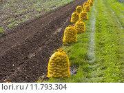 Купить «farm harvest potato cultivation thanksgiving», фото № 11793304, снято 16 июня 2019 г. (c) PantherMedia / Фотобанк Лори