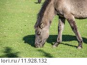 Купить «horse horses lmener wildpferde gregarious», фото № 11928132, снято 26 марта 2019 г. (c) PantherMedia / Фотобанк Лори