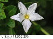Купить «beautiful wild flower in forest», фото № 11952236, снято 22 октября 2019 г. (c) PantherMedia / Фотобанк Лори