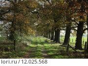 Купить «tree trees avenue calibrate alleeb», фото № 12025568, снято 15 июля 2020 г. (c) PantherMedia / Фотобанк Лори