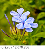 Купить «Violet flower in park», фото № 12070836, снято 23 июля 2019 г. (c) PantherMedia / Фотобанк Лори