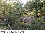 Купить «nature green animal holiday sport», фото № 12077008, снято 21 марта 2019 г. (c) PantherMedia / Фотобанк Лори