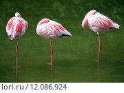 Купить «pink three sleep sleeping flamingo», фото № 12086924, снято 19 октября 2019 г. (c) PantherMedia / Фотобанк Лори