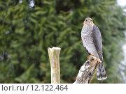 Купить «winter trunk raptor birds of», фото № 12122464, снято 3 июня 2020 г. (c) PantherMedia / Фотобанк Лори