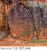 Купить «Large Panel of Petroglyphs», фото № 12187244, снято 16 октября 2018 г. (c) PantherMedia / Фотобанк Лори