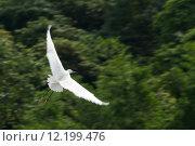 Купить «White stork with wings spread against trees», фото № 12199476, снято 20 января 2020 г. (c) PantherMedia / Фотобанк Лори