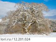 Купить «winter oak calibrate rhineland palatinate», фото № 12201024, снято 25 марта 2019 г. (c) PantherMedia / Фотобанк Лори