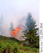 Купить «Coniferous forest in fire», фото № 12209364, снято 20 марта 2019 г. (c) PantherMedia / Фотобанк Лори