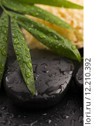 Купить «Green leaf on spa stone on wet black surface», фото № 12210392, снято 18 июля 2019 г. (c) PantherMedia / Фотобанк Лори