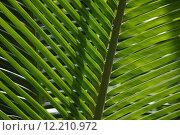 Купить «tropical sunlight cocos brightness coco», фото № 12210972, снято 23 февраля 2019 г. (c) PantherMedia / Фотобанк Лори