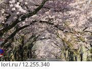 Купить «Tunnel of cherry blossoms in Izu highland, Shizuoka, Japan», фото № 12255340, снято 22 сентября 2018 г. (c) PantherMedia / Фотобанк Лори