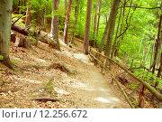 Купить «beautiful nature green travel outdoors», фото № 12256672, снято 23 февраля 2019 г. (c) PantherMedia / Фотобанк Лори