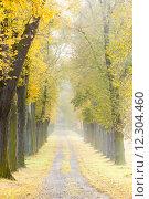 Купить «autumnal alley», фото № 12304460, снято 25 января 2020 г. (c) PantherMedia / Фотобанк Лори