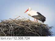 Купить «stork in nest», фото № 12308724, снято 20 января 2020 г. (c) PantherMedia / Фотобанк Лори