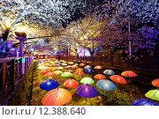 Купить «cherry blossoms, busan city in south korea», фото № 12388640, снято 23 февраля 2019 г. (c) PantherMedia / Фотобанк Лори