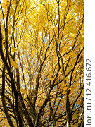 Купить «Осенняя листва», фото № 12416672, снято 3 октября 2010 г. (c) Татьяна Кахилл / Фотобанк Лори