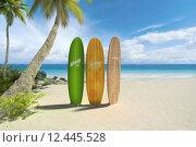 Купить «Surf boards on the beach», фото № 12445528, снято 21 ноября 2018 г. (c) PantherMedia / Фотобанк Лори