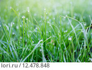 Купить «Dew on a grass in spring», фото № 12478848, снято 18 февраля 2019 г. (c) PantherMedia / Фотобанк Лори
