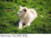 Купить «cute bright baby cat offspring», фото № 12547932, снято 17 июня 2019 г. (c) PantherMedia / Фотобанк Лори