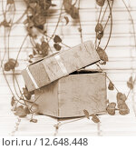Открытая подарочная коробка и ветки растения. Стоковое фото, фотограф Любовь Назарова / Фотобанк Лори