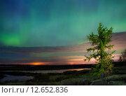 Купить «Northern lights (Aurora Borealis)», фото № 12652836, снято 7 сентября 2015 г. (c) Art Konovalov / Фотобанк Лори