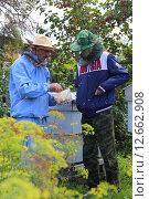 Проба пчелиных сот (2015 год). Редакционное фото, фотограф Анатолий Матвейчук / Фотобанк Лори