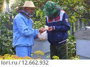 Пчелиные соты в руках (2015 год). Редакционное фото, фотограф Анатолий Матвейчук / Фотобанк Лори
