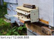 Пчелы около улея. Стоковое фото, фотограф Анатолий Матвейчук / Фотобанк Лори